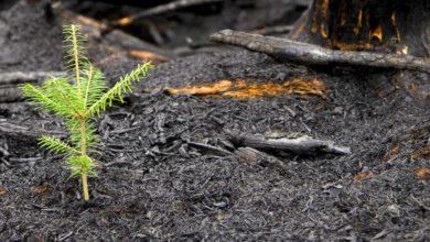 Born of Fire: A Seed of Hope Emerges From the Devastation of the Columbia River Gorge